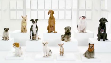 Volkswagen Dogs Barkathon